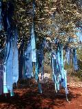 84 Prayer Tree (Turkcell blue)