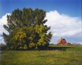 farm, near Camrose Alberta.