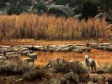 Sierra Nevada East Side - 2004