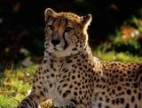 Cheeta 2004, 2005