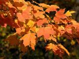 Fall Foto's