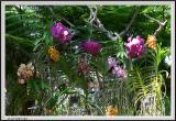Garden - CRW_1307 copy.jpg
