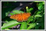 Monarch Butterfly Close - CRW_1349 copy.jpg