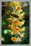 Yellow Bunch - CRW_1289 copy.jpg