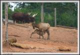 Deers and Horns - CRW_1426 copy.jpg