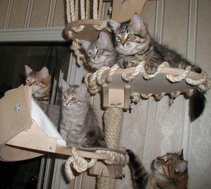 The cat tree is fun!