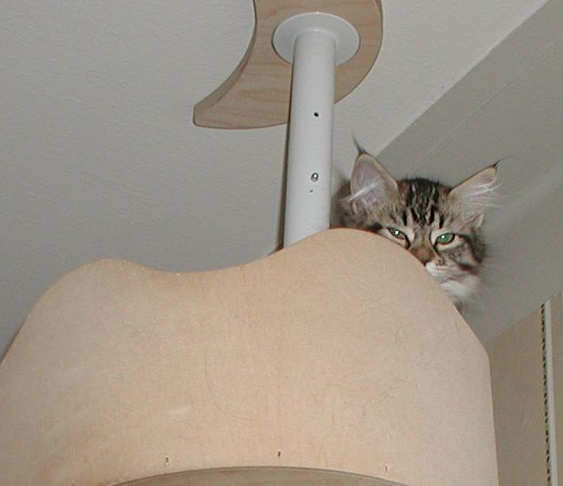 Hilda likes to sleep on the top.