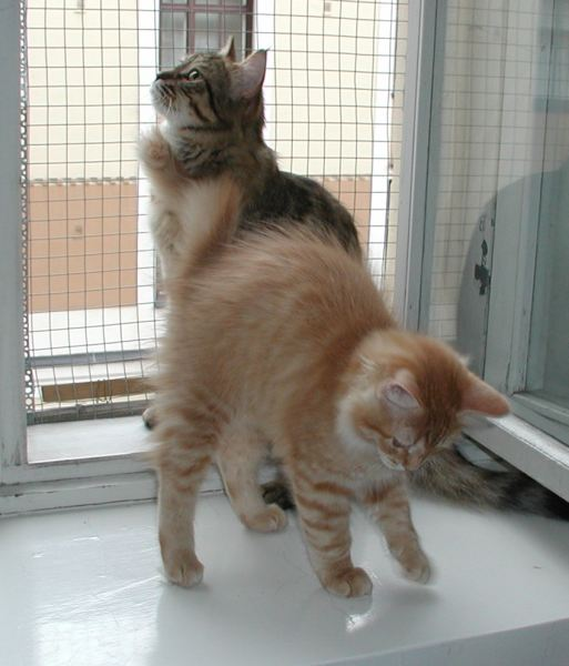 Riki and mom Roosa