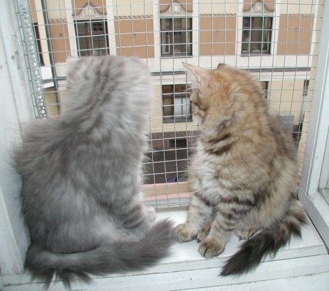 Viki and pikku checking what happens on  the street.