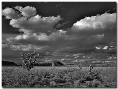 Mojave Desert (IR)