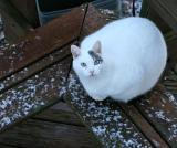2004-12-17: I Ching Waits in the Snow