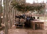Grade School under the Trees