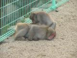 Choshikei-Osaruno-kuni-Monkey Park
