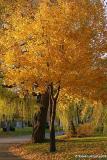 Chant d'automne