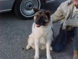 Abandoned to forage for herself, Akita named Zoe was rescued on January 17, 2002, by Joe Wilson of Man's Best Friend