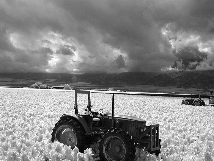 Tractors in field (infrared)