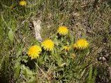 Flowers in Powell Meadow