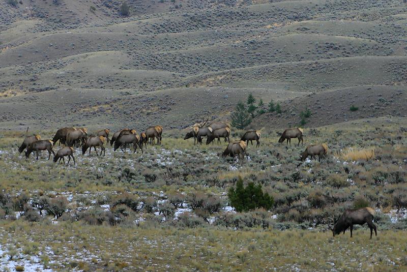 Elk 170