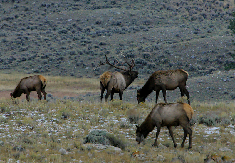 Elk 140