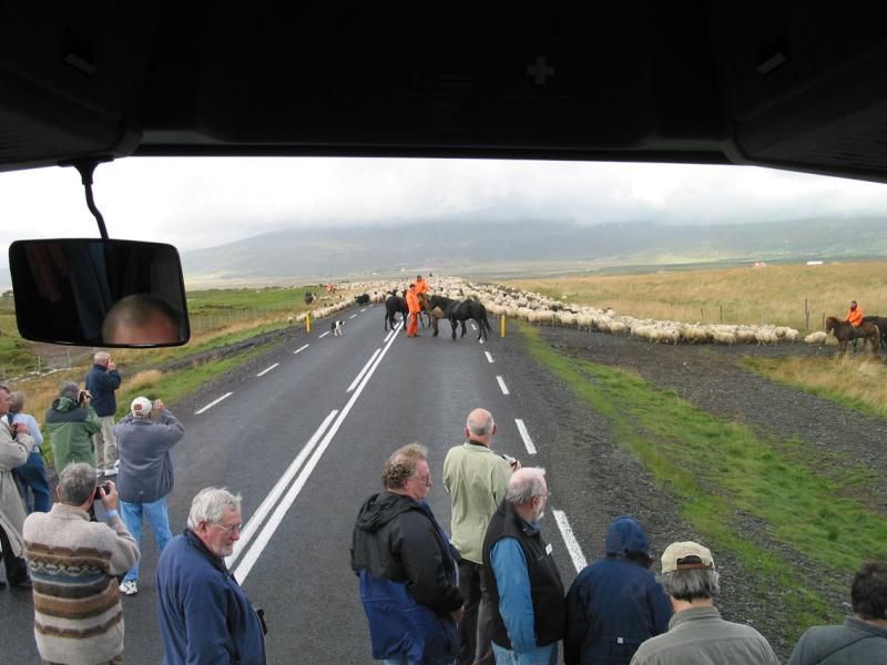 Running into sheep herders
