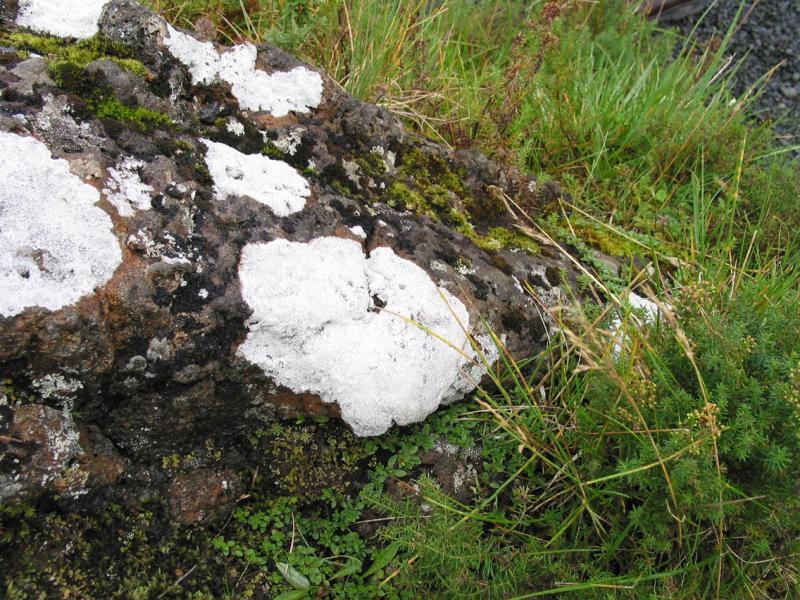 White Lichen on rocks