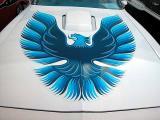 Firebird hood