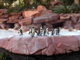 African Penguins - Flamingo bird gardens