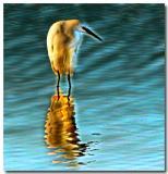 Wild Egret