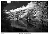 Pond at Pichetti Ranch OSP in Infrared