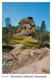Goldfields at Pinnacles National Monument