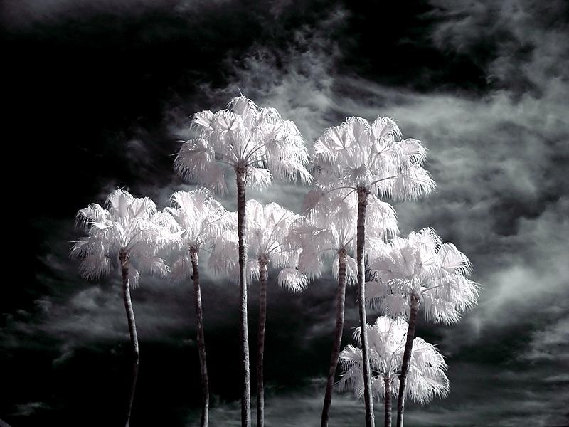 Alien Palms