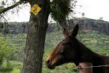 Mule Crossing, Butte Creek Canyon