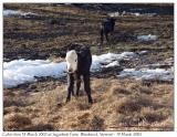 2005Mar19 Vermont-46.jpg