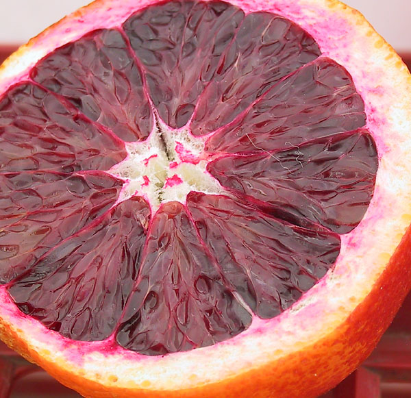 Bloody Red Blood Orange