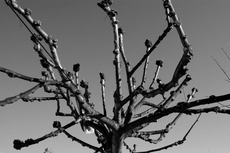 Knotted branches
