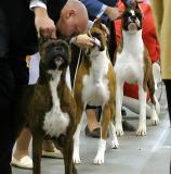 Boxer lineup