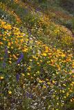 Apache Trail Flowers #2