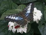 butterfly_pavilion