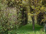 Sancerre trees