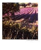 : Lavender :