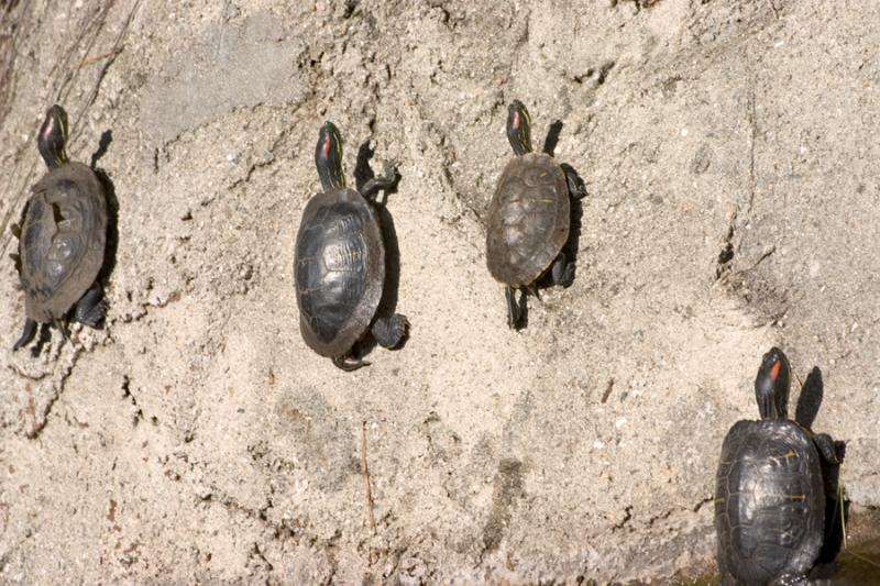 turtles on wall.jpg