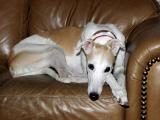 Pookie Dog 3.jpg