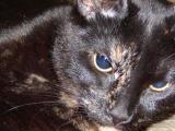 Meet Sadie : Feb. 07 & 08,'02