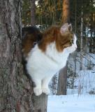martta_tree2.jpg