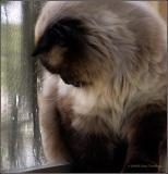 fluffy-himmy.jpg