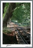 Train tracks around the park