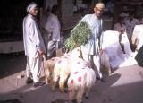 Sheep at the Market