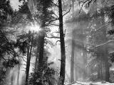 Snowfall RaysbyLisaYoung