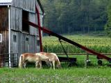 Amish Communities in Pennsylvania