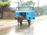Cow - Truck